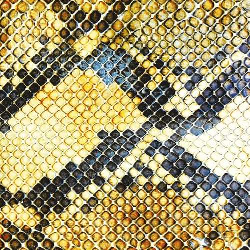CD Shop - AMAZING SNAKEHEADS AMPHETAMINE BALLADS
