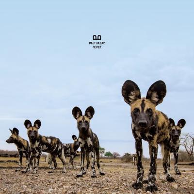 CD Shop - BALTHAZAR FEVER LTD.